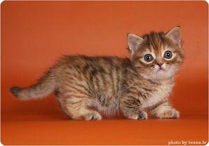 Micuța pisicuta