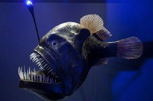 Fish angler trăiește adânc