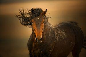 Cum arată un cal ca un Mustang