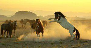 Mustangul calului