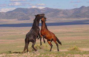 Descrierea cailor Mustang