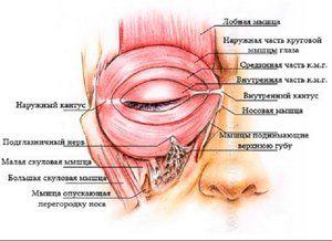 Cum funcționează ochiul omului