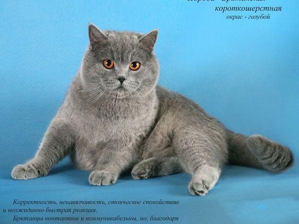 Populare rase de pisici