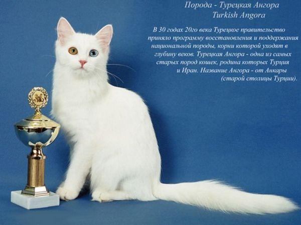 Conținutul pisicilor