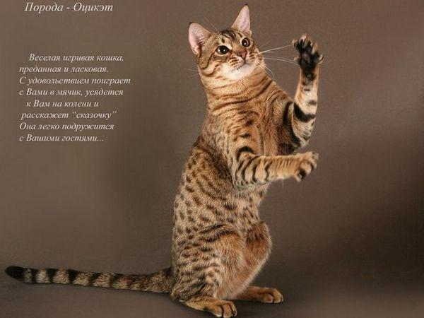 Date externe ale pisicilor