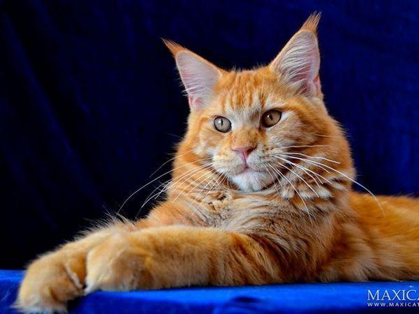 Datele pisicilor