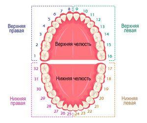Schema de cavitate orală