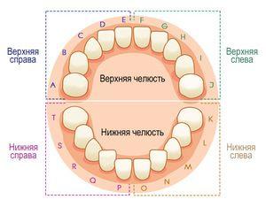 Linia dentară