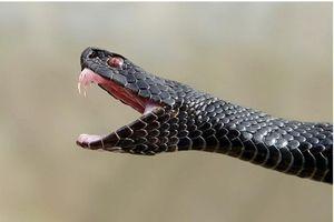 Ce să faceți dacă un șarpe mușcă