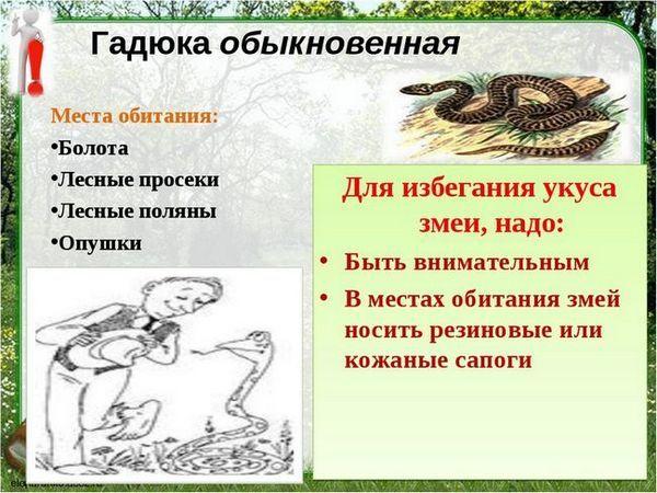 Viperul șarpele otrăvitor este periculos