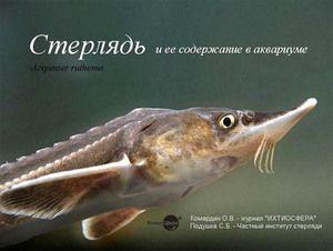 Specii și descriere rare de pești - Sterlet