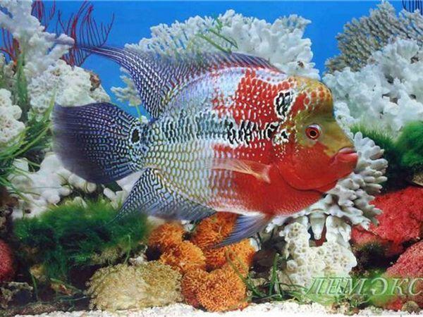 Un pește de acvariu frumos