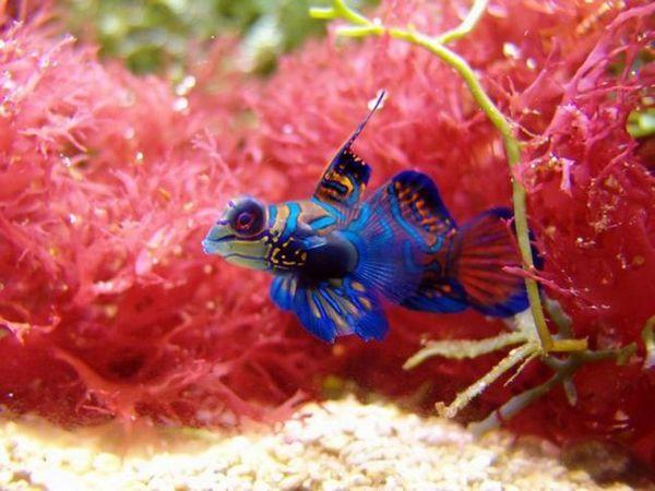 Cel mai frumos pește pentru păstrarea casei
