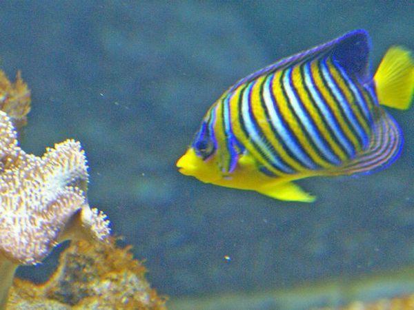 Pesme marine pentru întreținerea domestică