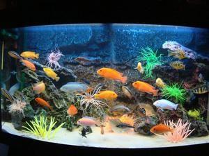 Descrierea celor mai populare pești de acvariu pentru conținutul intern