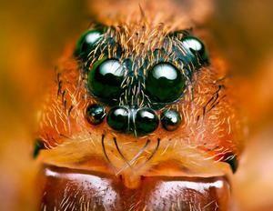 Spider`s Eyes