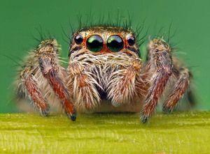 Ochii unui păianjen