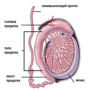 Inflamația testiculelor - cauze ale bolii