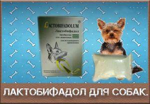 Lactobifadol - medicamente de uz veterinar