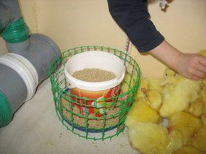 Îngrijirea goslings