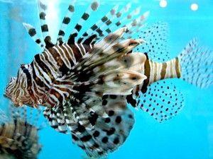 Particularități ale vieții peștelui de pește de mare