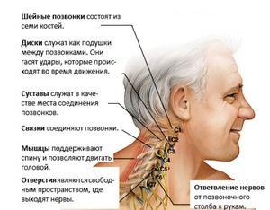 Anatomia secțiunii coloanei vertebrale - diagrama