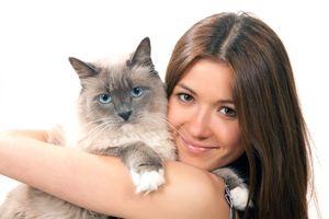 Otita la pisici simptome și tratament