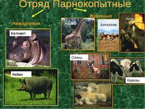 Animale de animale de origine animală
