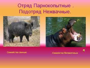 Clasă de animale biongulate