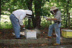 Cum să învăț regulile apiculturii
