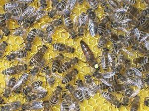Cum de a face albine