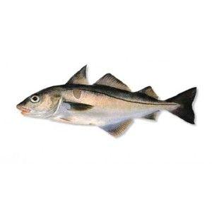 Egipt - descrierea peștilor și a valorii lor culinare