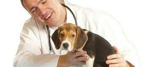 Pro și contra castrării câinilor