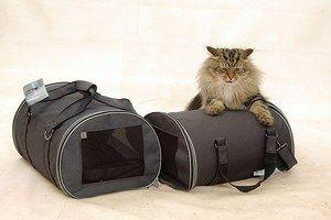 Ce sunt capturile de pisici?