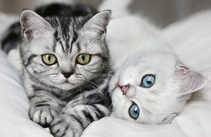 Pisicile și bolile renale