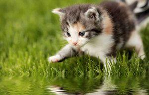 Motivele pentru care o pisică este frică de apă
