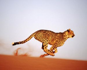 Viteza ghepardului