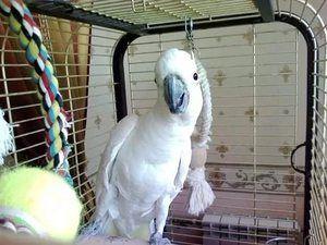 Cage pentru Cockatoo