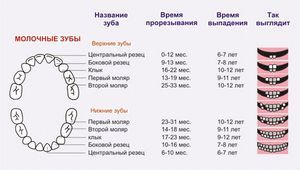 Ordinea dentiției