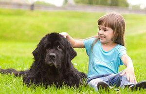 Newfoundland - cel mai bun câine pentru un copil