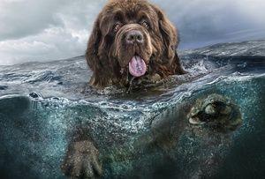 Care sunt obiceiurile unui câine în Newfoundland?