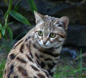 Pisici sălbatice în natură