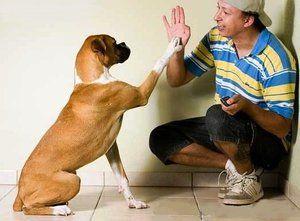 Cursul corect de câine la domiciliu