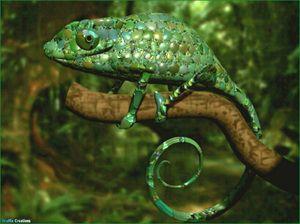 Reptile și grupul lor