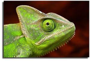 Reptile și tipurile acestora