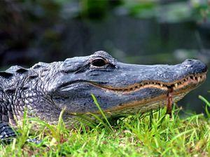 Reptile și ryadzryad lor