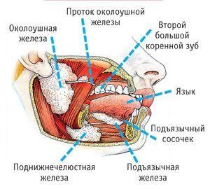 Glandele