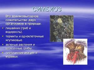 Exemple și descrierea simbiozelor în fauna sălbatică