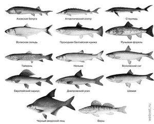 Soiuri de pește comercial