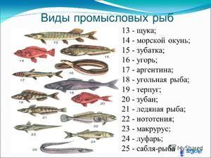 Valoarea peștilor comerciali